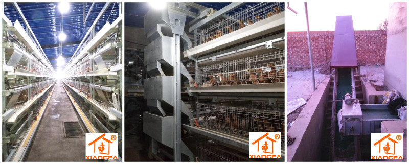Rearing chicken cages