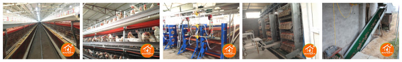 Manure removal PP cleaning system
