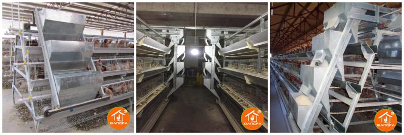 Chicken feed machine Automatic