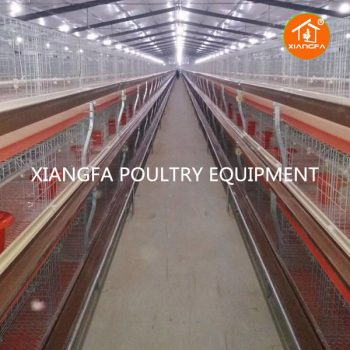 Broiler Chicken Cage Automatic 72 Birds