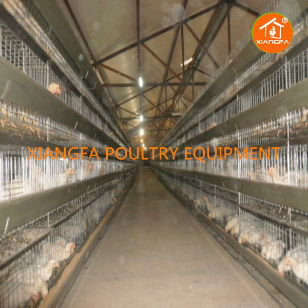 Broiler Rearing Cages