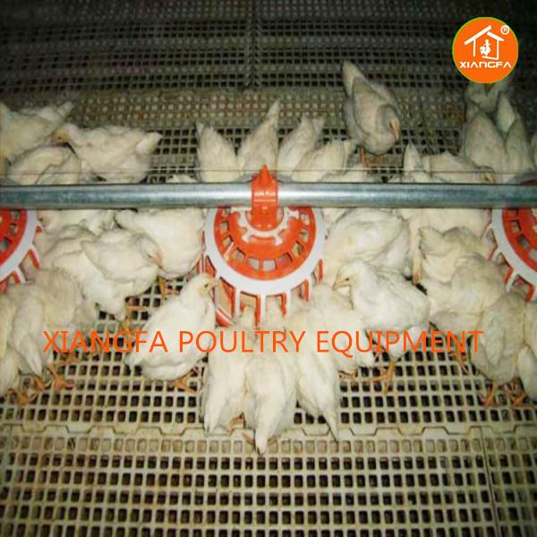 Chicken feeding line