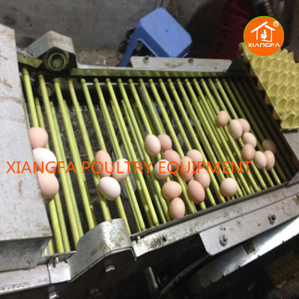 Chicken Egg Collecting System
