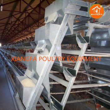 Chicken Feed Machine Automatic