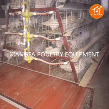 Chicken Rearing Cages 240 Birds