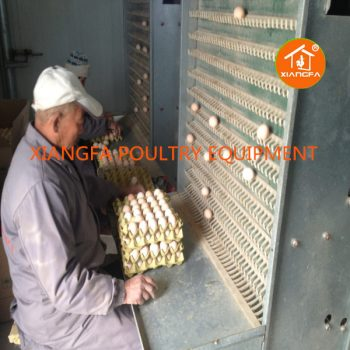 Egg Collecting Machine For Chicken