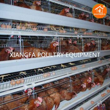 Layer Battery Cage 4 Tiers H Type128/256 Birds