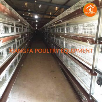 H Type Rearing Chicken Cage 224 Birds