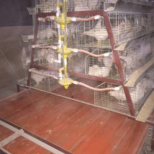 How To Build Pigeon Breeding Cages